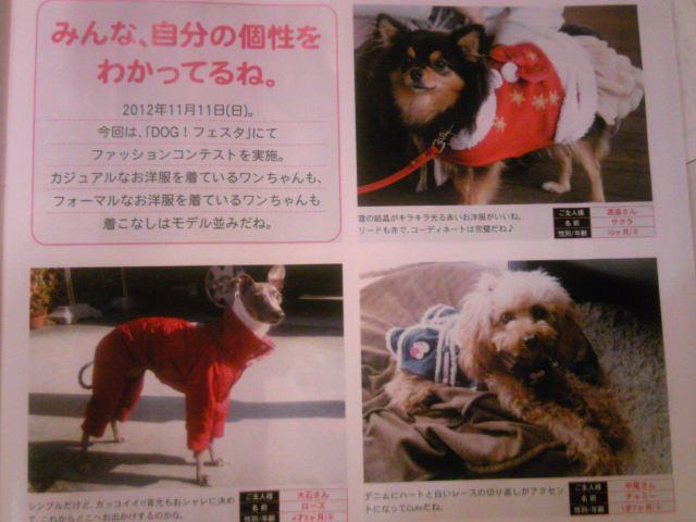 DOG!フェスタのファッションコンテスト掲載紙発行!